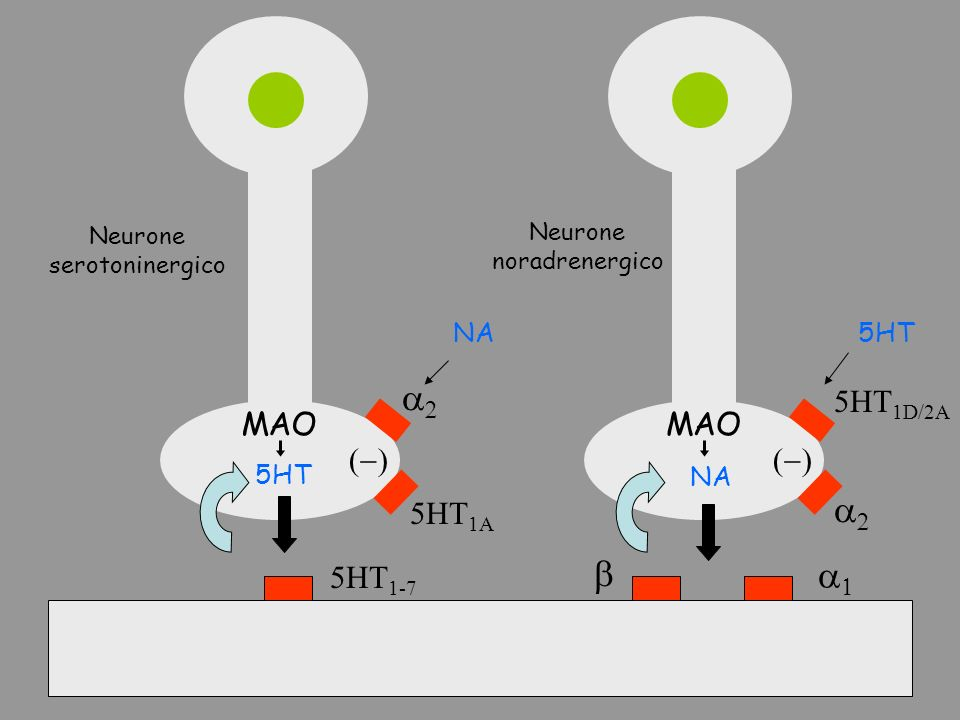 a2 a2 b a1 5HT1D/2A MAO MAO (-) (-) 5HT1A 5HT1-7 NA 5HT 5HT NA Neurone