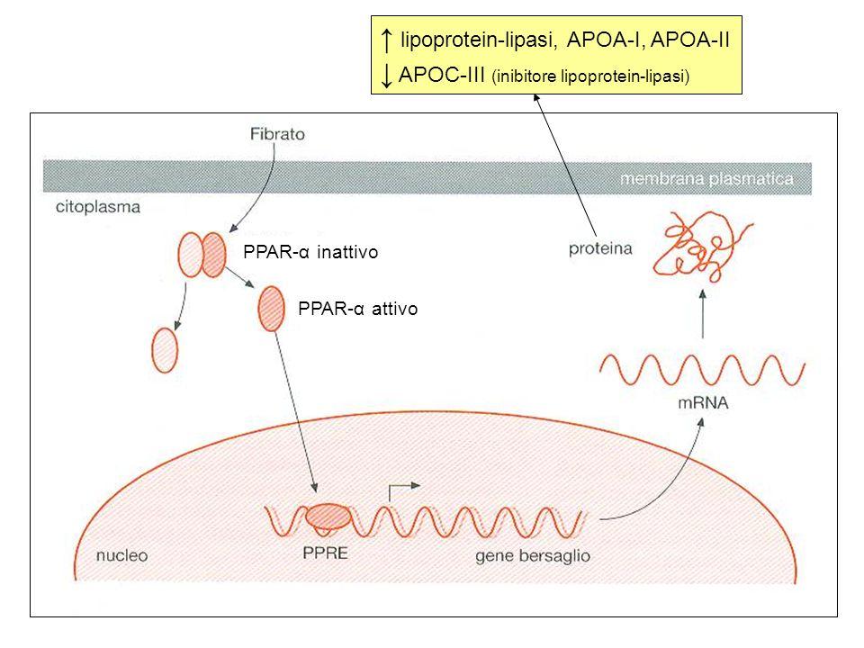 ↑ lipoprotein-lipasi, APOA-I, APOA-II