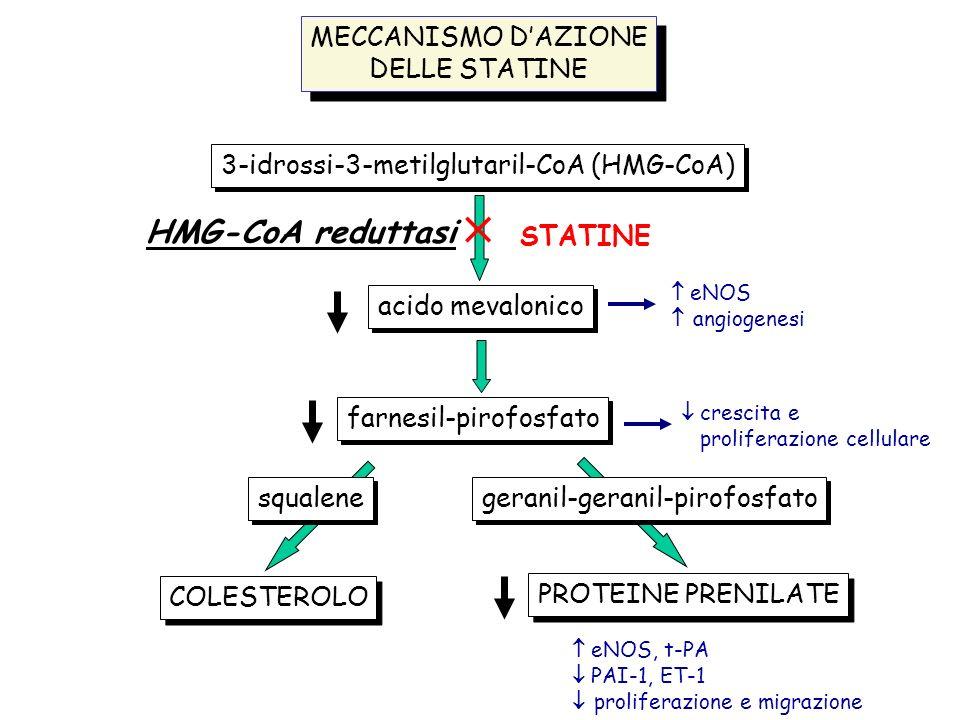  STATINE HMG-CoA reduttasi MECCANISMO D'AZIONE DELLE STATINE