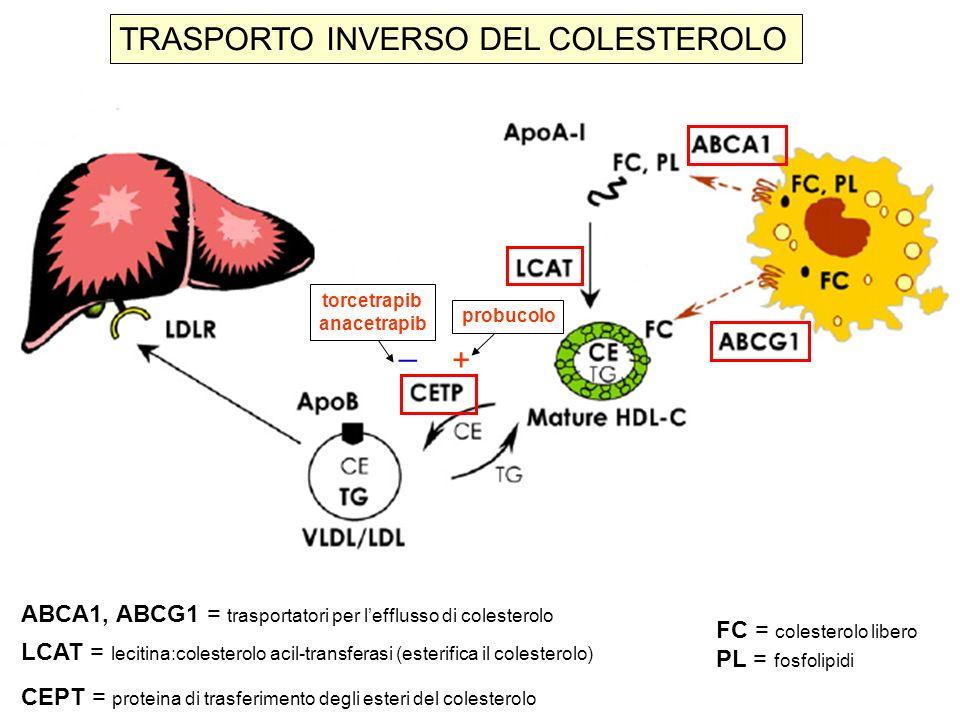 TRASPORTO INVERSO DEL COLESTEROLO