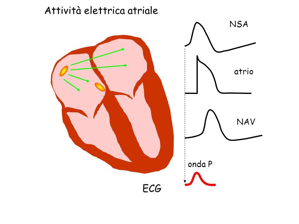 Attività elettrica atriale