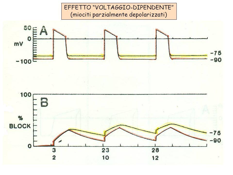 EFFETTO VOLTAGGIO-DIPENDENTE (miociti parzialmente depolarizzati)