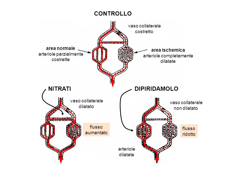 CONTROLLO NITRATI DIPIRIDAMOLO vaso collaterale costretto area normale