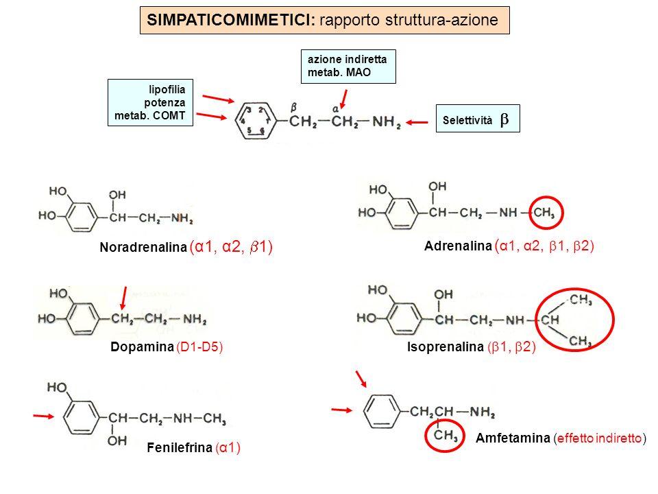 SIMPATICOMIMETICI: rapporto struttura-azione