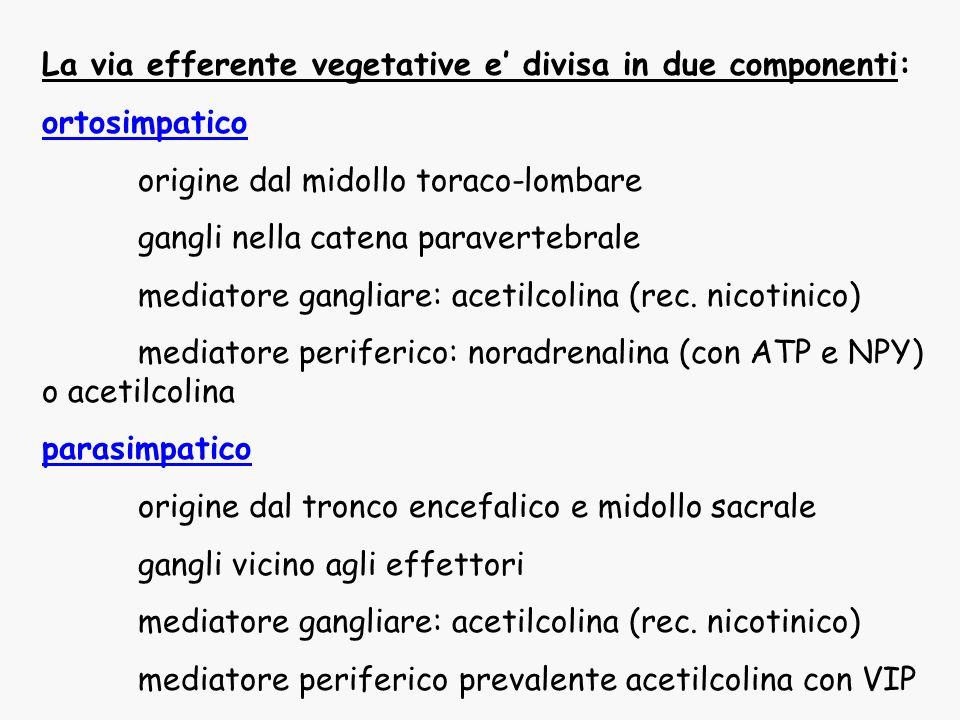 La via efferente vegetative e' divisa in due componenti: