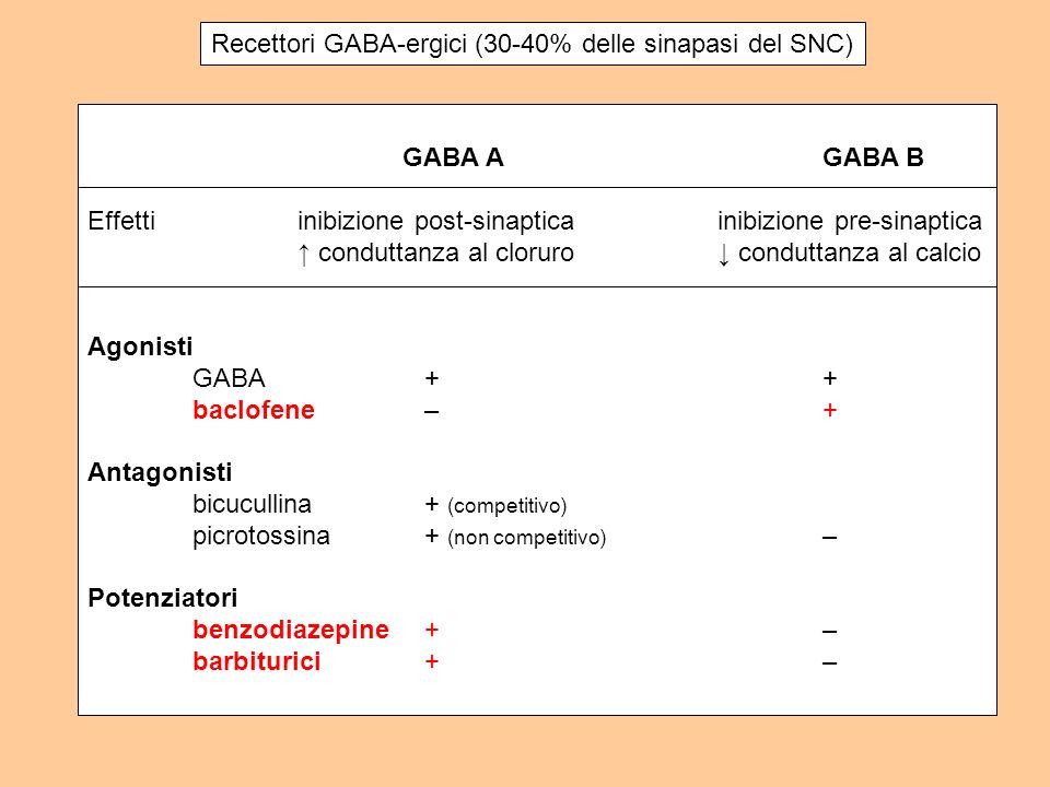 Recettori GABA-ergici (30-40% delle sinapasi del SNC)