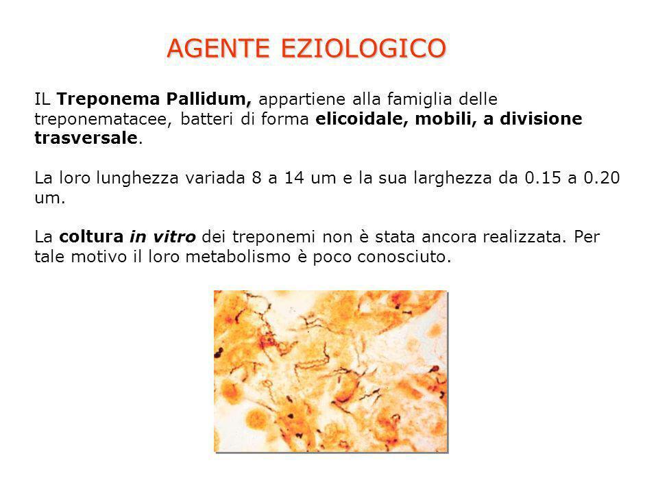 AGENTE EZIOLOGICO IL Treponema Pallidum, appartiene alla famiglia delle treponematacee, batteri di forma elicoidale, mobili, a divisione trasversale.