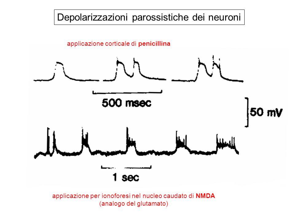 Depolarizzazioni parossistiche dei neuroni