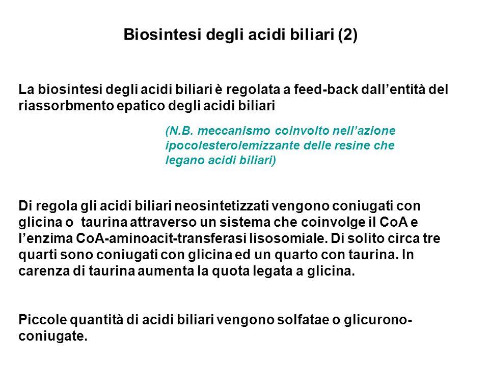 Biosintesi degli acidi biliari (2)