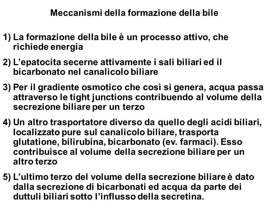 Meccanismi della formazione della bile
