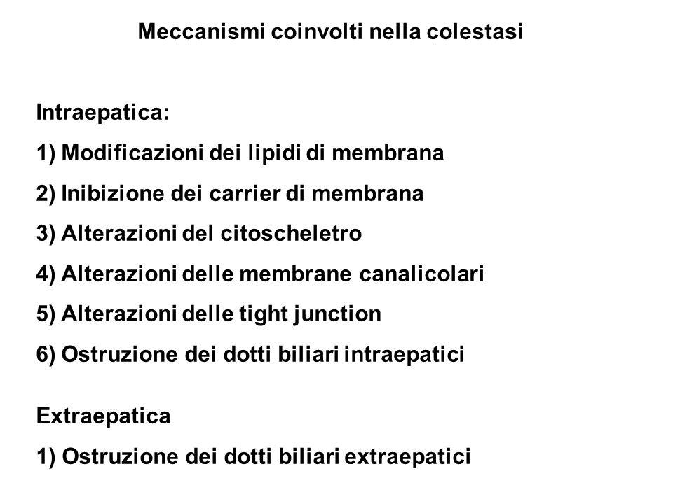 Meccanismi coinvolti nella colestasi