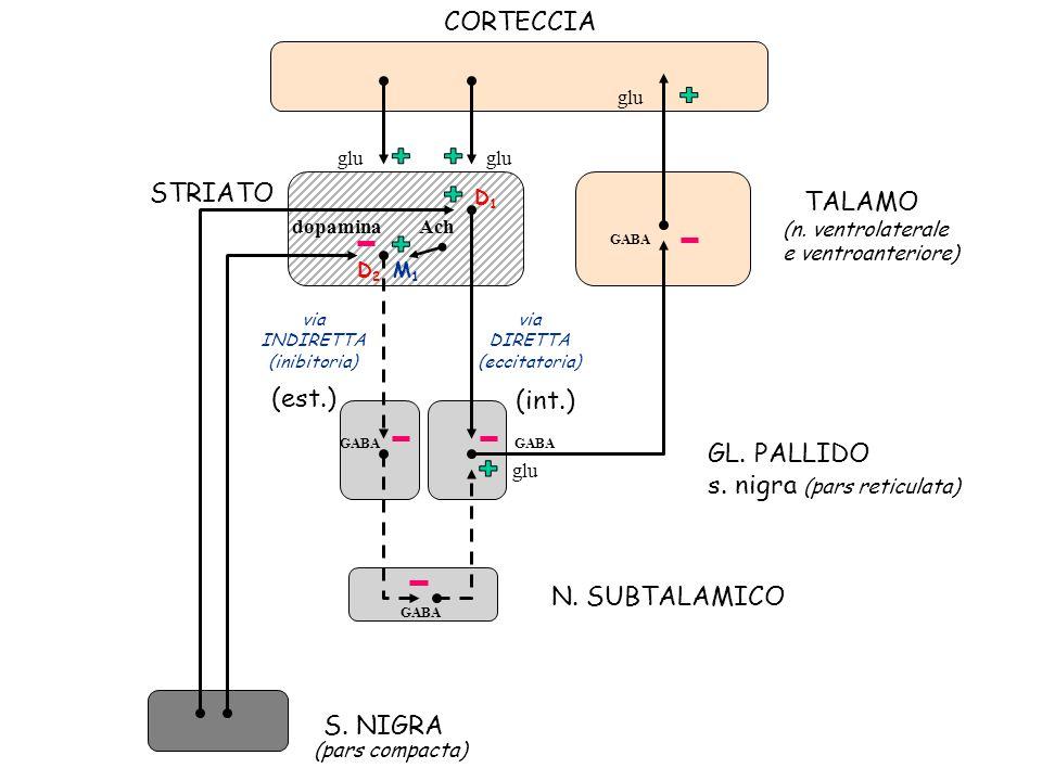 + CORTECCIA STRIATO TALAMO (est.) (int.) GL. PALLIDO