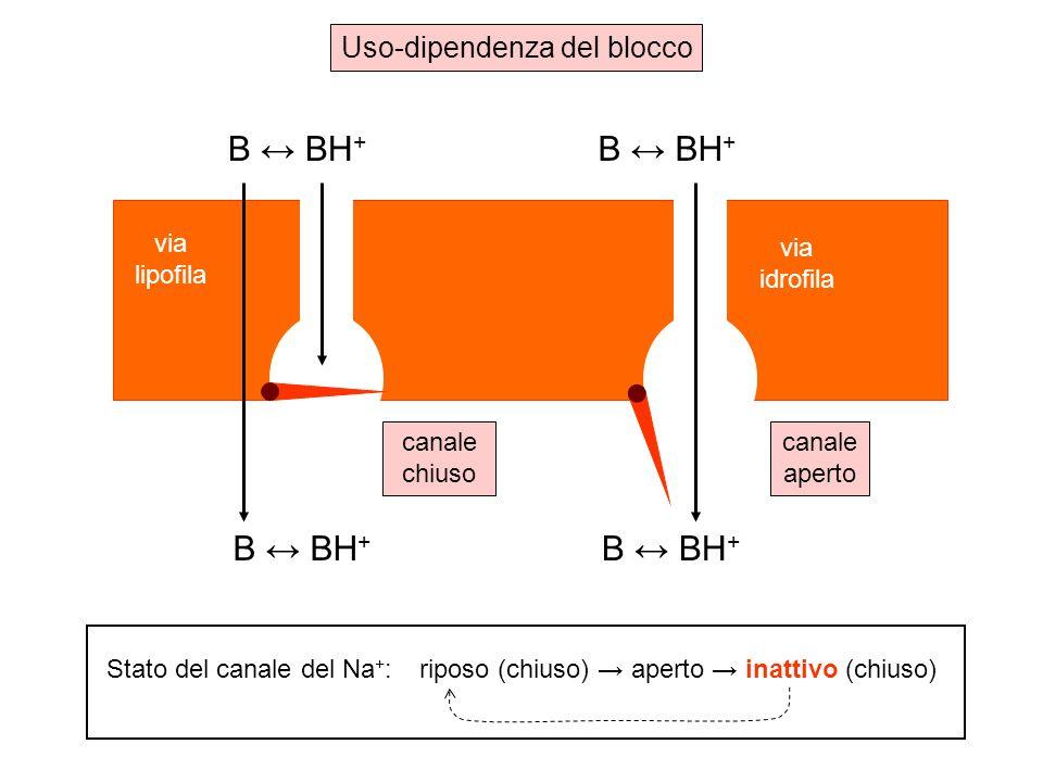 B ↔ BH+ Uso-dipendenza del blocco via lipofila via idrofila canale