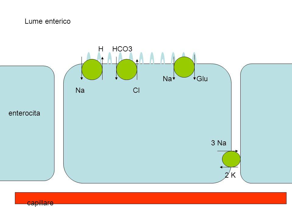 Lume enterico H HCO3 Na Glu Na Cl enterocita 3 Na 2 K capillare
