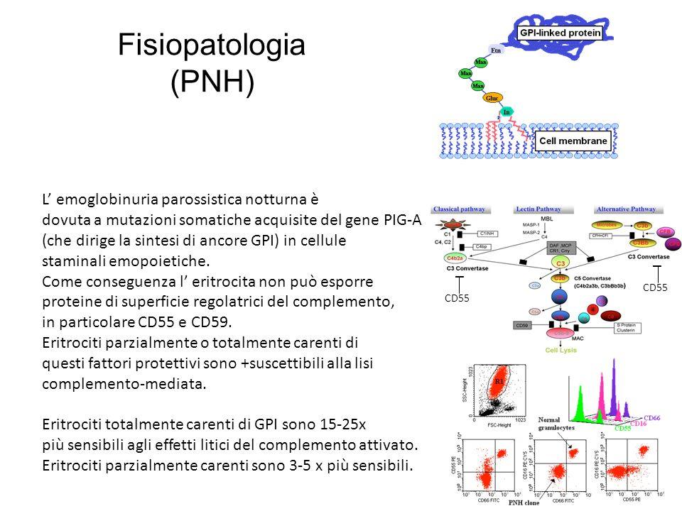Fisiopatologia (PNH) L' emoglobinuria parossistica notturna è