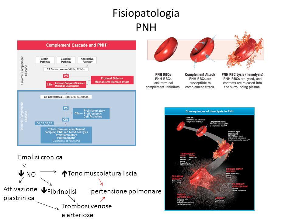 Fisiopatologia PNH Emolisi cronica  NO Tono muscolatura liscia