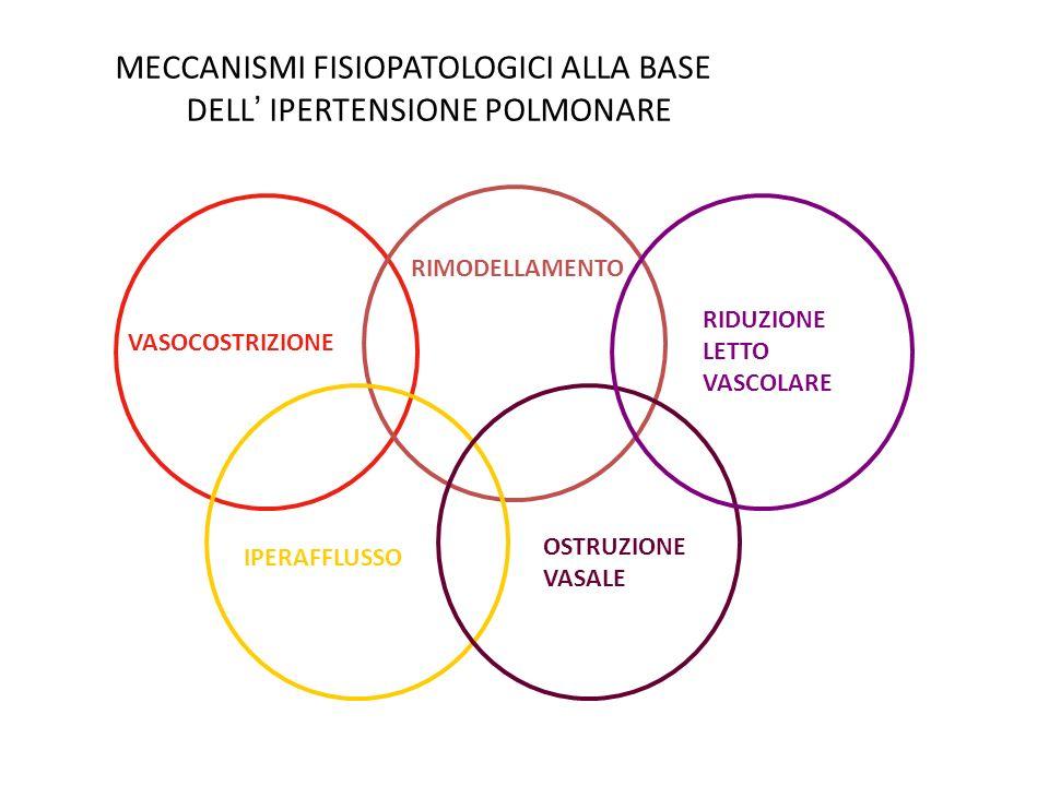MECCANISMI FISIOPATOLOGICI ALLA BASE DELL' IPERTENSIONE POLMONARE