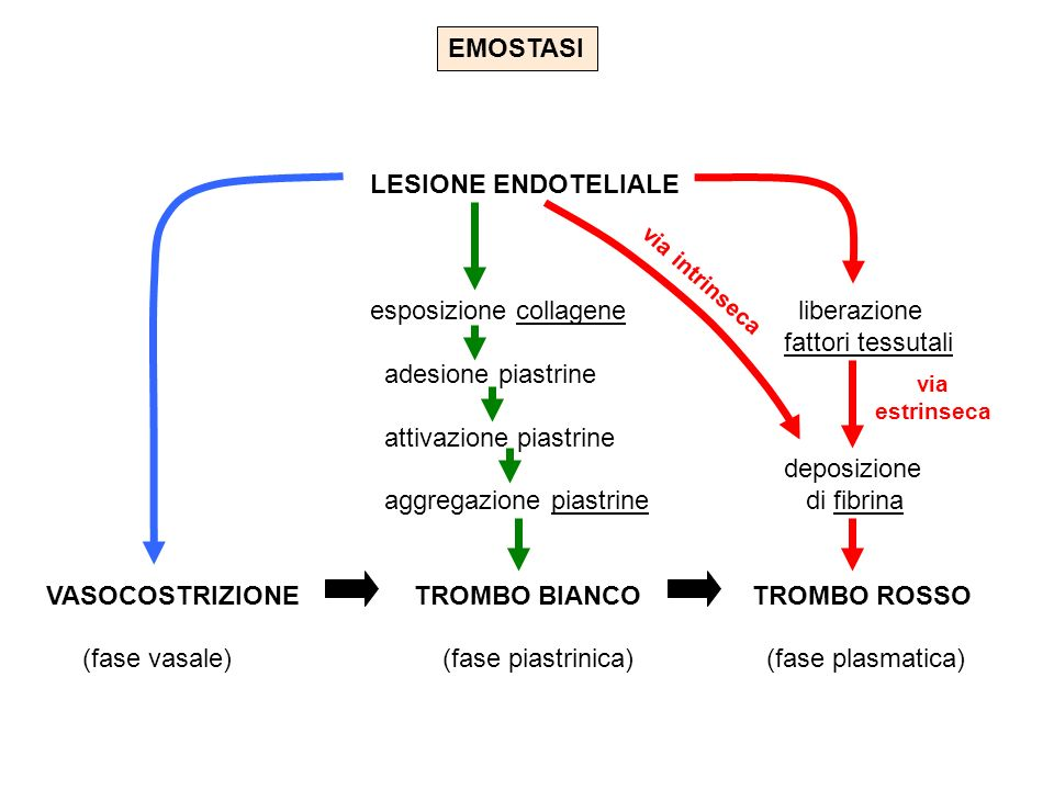 esposizione collagene liberazione fattori tessutali adesione piastrine