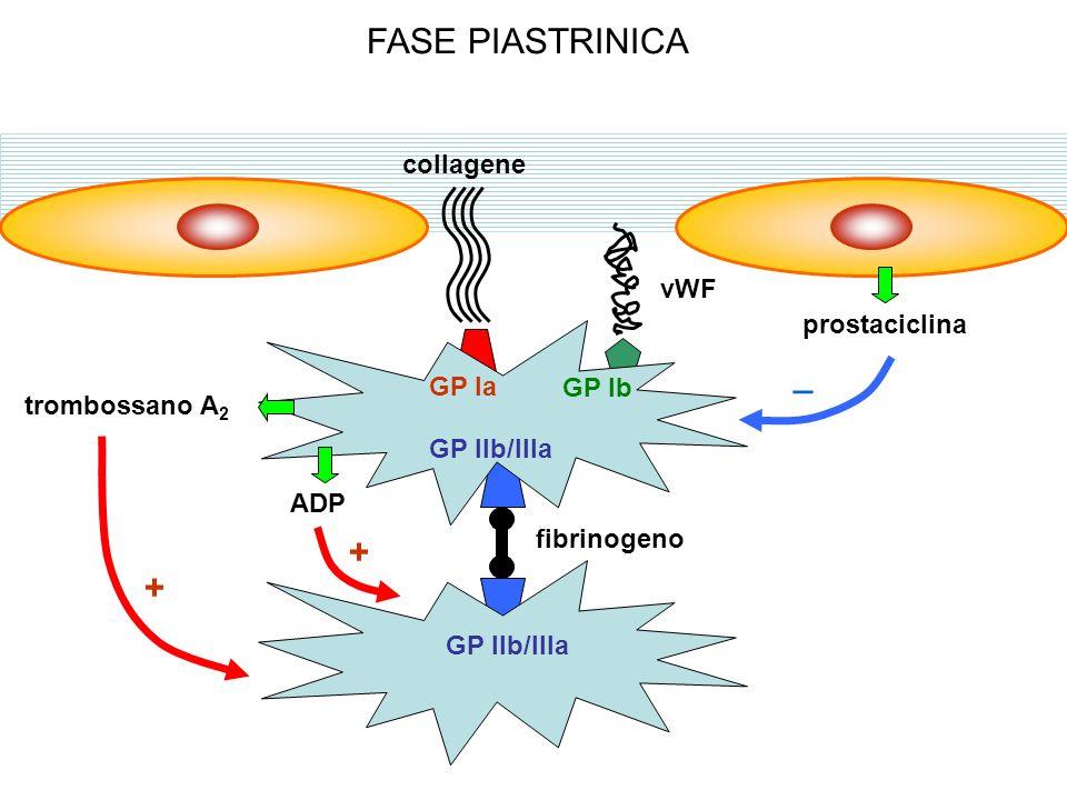 FASE PIASTRINICA _ + collagene vWF prostaciclina GP Ia GP Ib