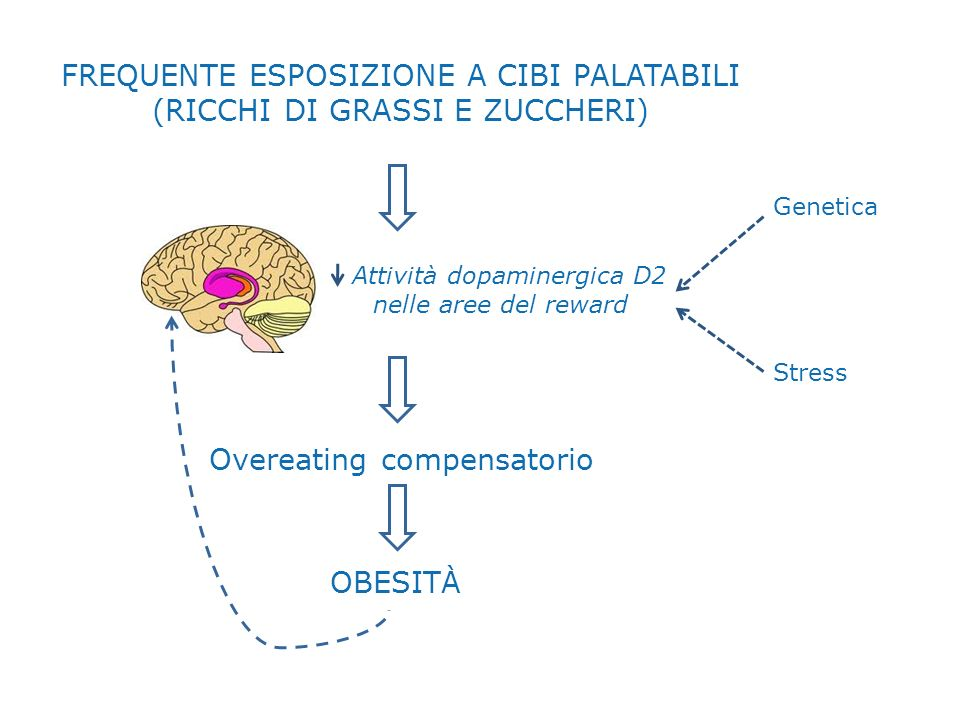 Frequente esposizione a cibi palatabili (ricchi di grassi e zuccheri)