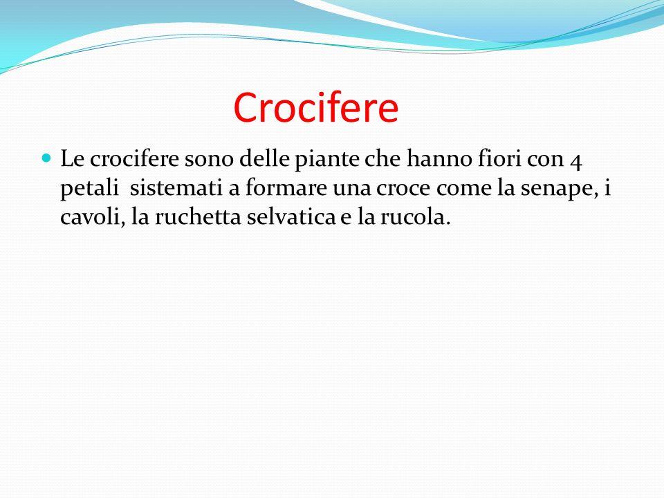 Crocifere