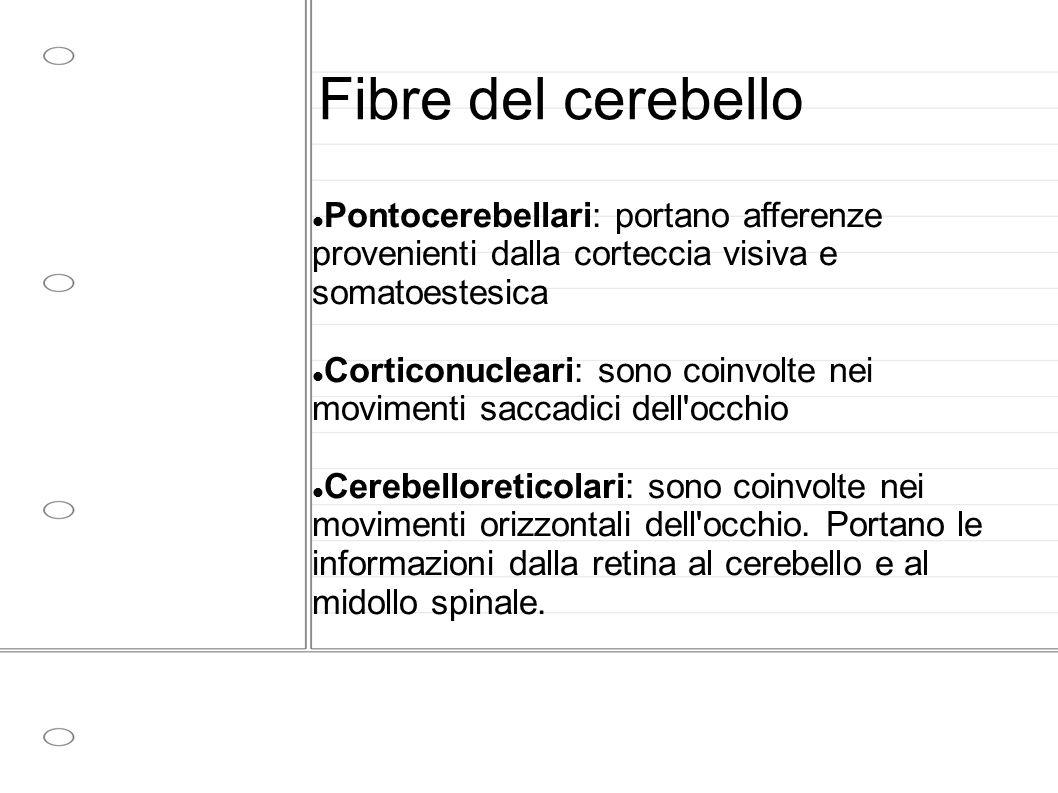 Fibre del cerebello Pontocerebellari: portano afferenze provenienti dalla corteccia visiva e somatoestesica.