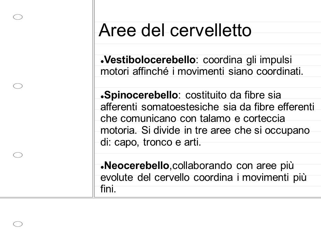 Aree del cervelletto Vestibolocerebello: coordina gli impulsi motori affinché i movimenti siano coordinati.