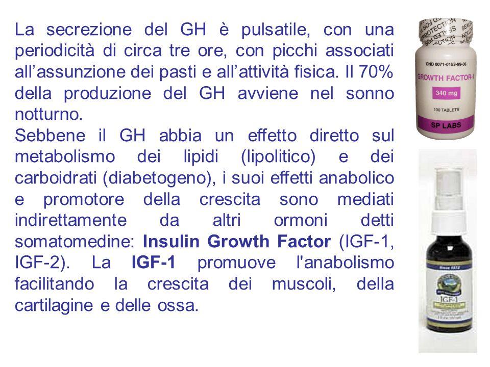 La secrezione del GH è pulsatile, con una periodicità di circa tre ore, con picchi associati all'assunzione dei pasti e all'attività fisica. Il 70% della produzione del GH avviene nel sonno notturno.