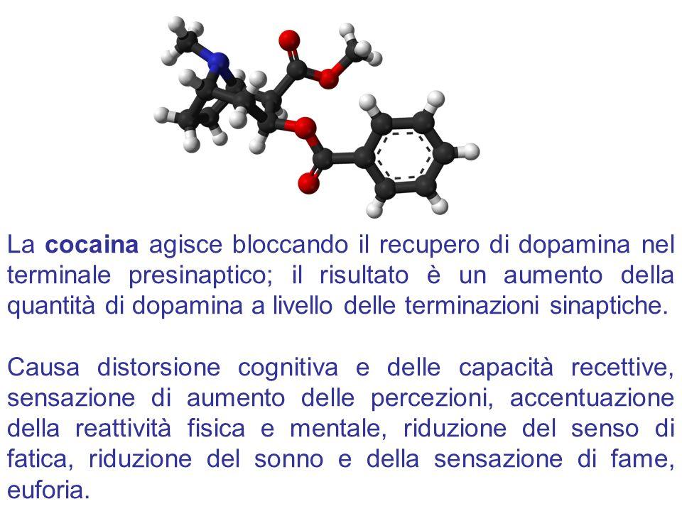 La cocaina agisce bloccando il recupero di dopamina nel terminale presinaptico; il risultato è un aumento della quantità di dopamina a livello delle terminazioni sinaptiche.