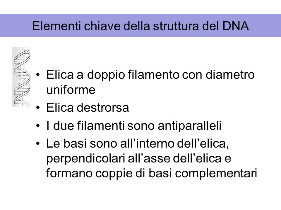 Elementi chiave della struttura del DNA