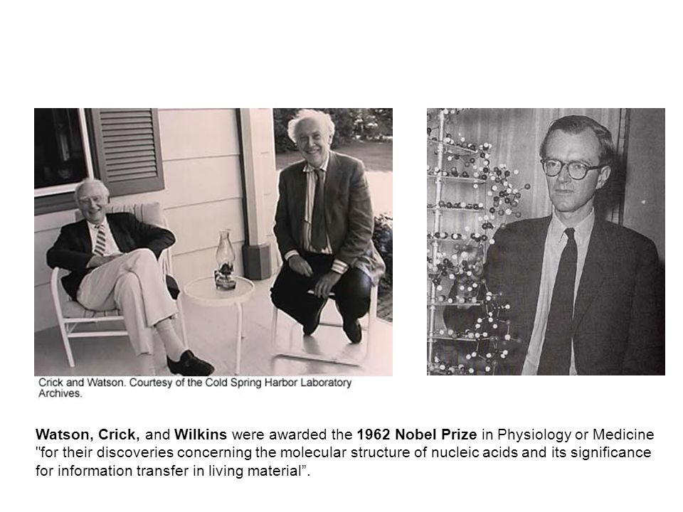 Watson, Crick, and Wilkins were awarded the 1962 Nobel Prize in Physiology or Medicine