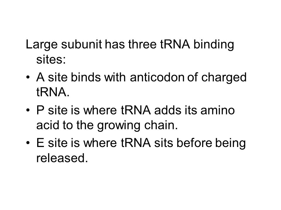 Large subunit has three tRNA binding sites: