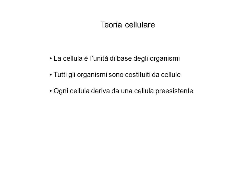 Teoria cellulare La cellula è l'unità di base degli organismi
