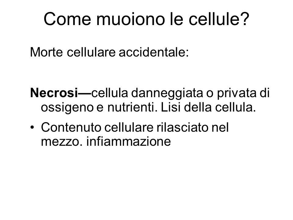 Come muoiono le cellule