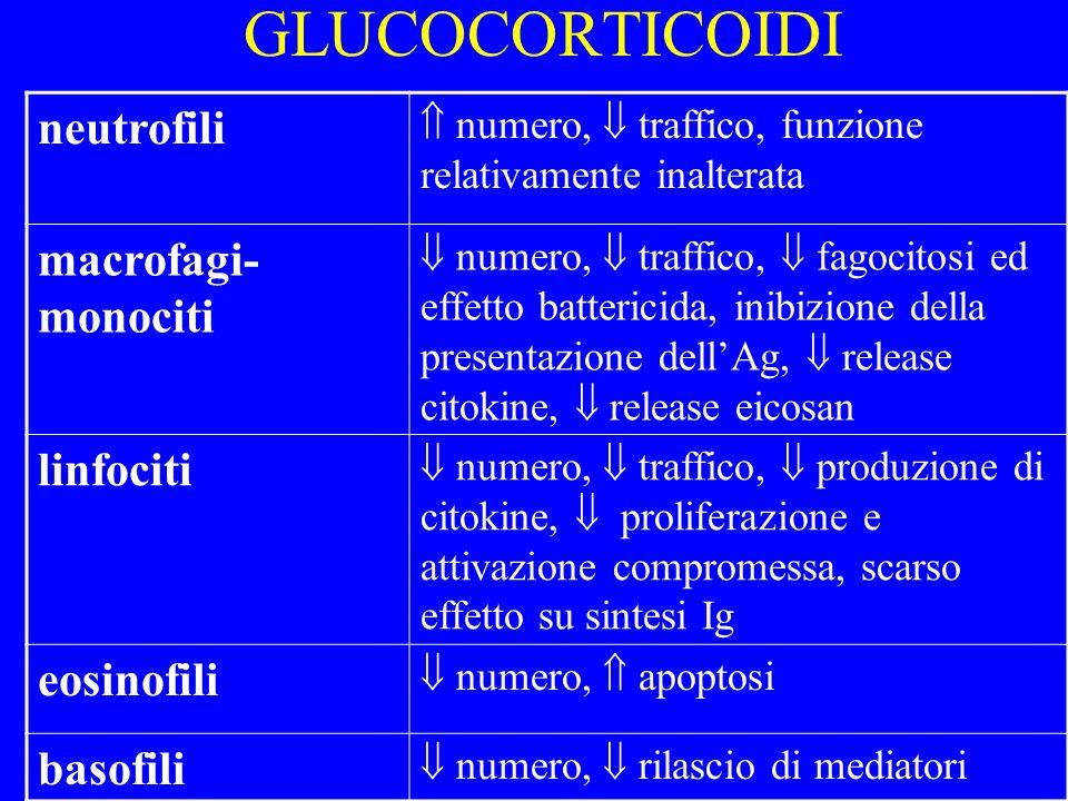 GLUCOCORTICOIDI neutrofili macrofagi-monociti linfociti eosinofili