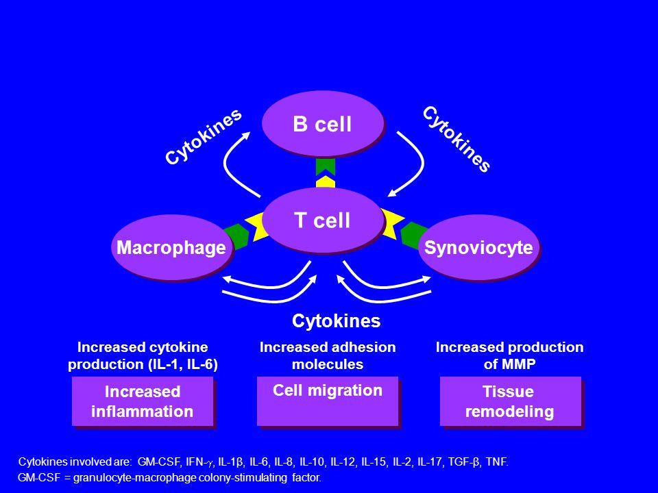 B cell T cell Cytokines Cytokines Macrophage Synoviocyte Cytokines
