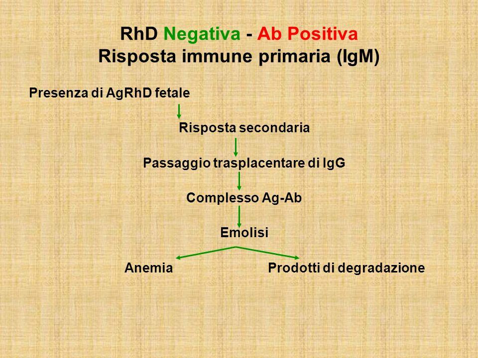 RhD Negativa - Ab Positiva Risposta immune primaria (IgM)