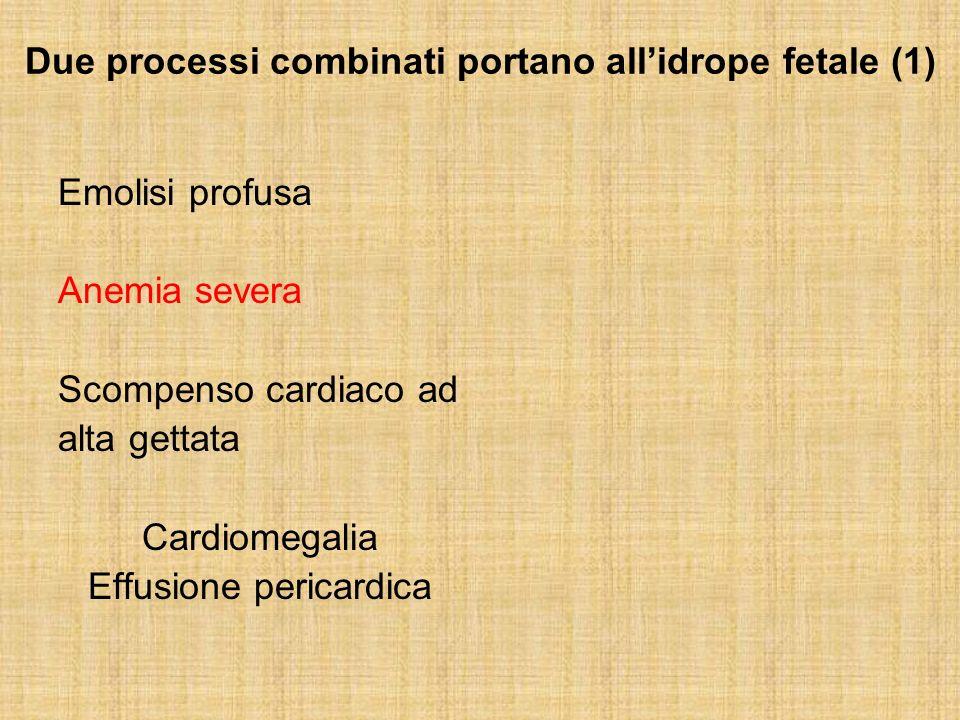 Due processi combinati portano all'idrope fetale (1)