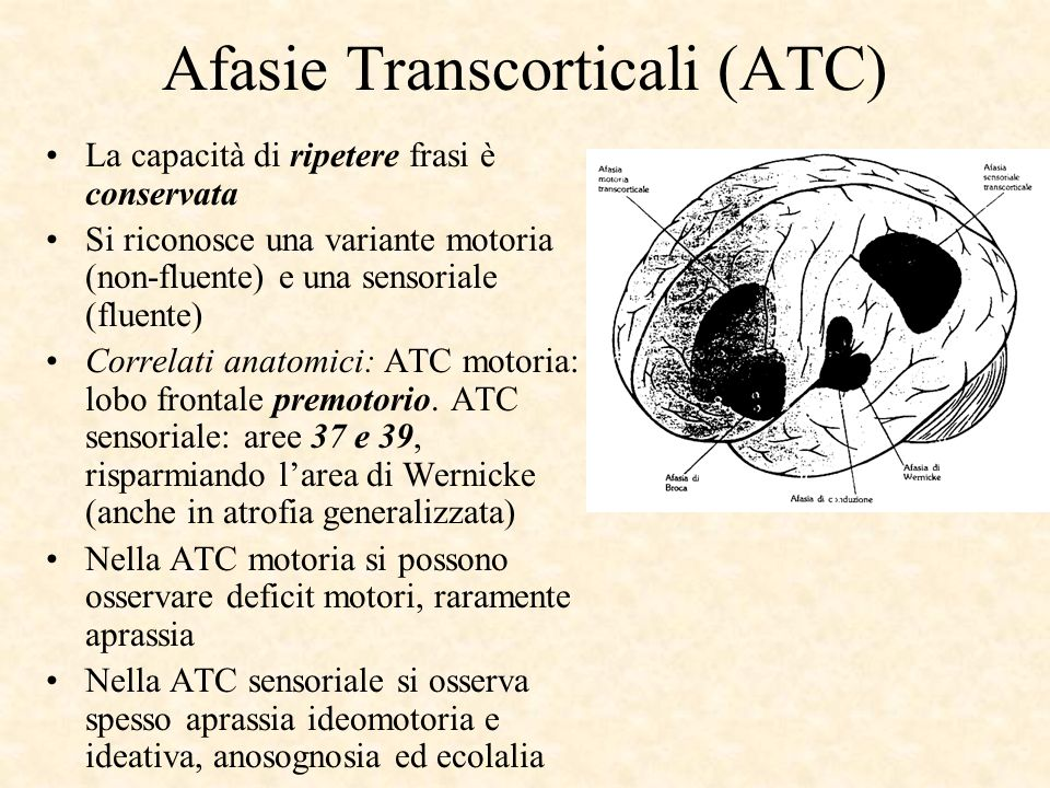 Afasie Transcorticali (ATC)