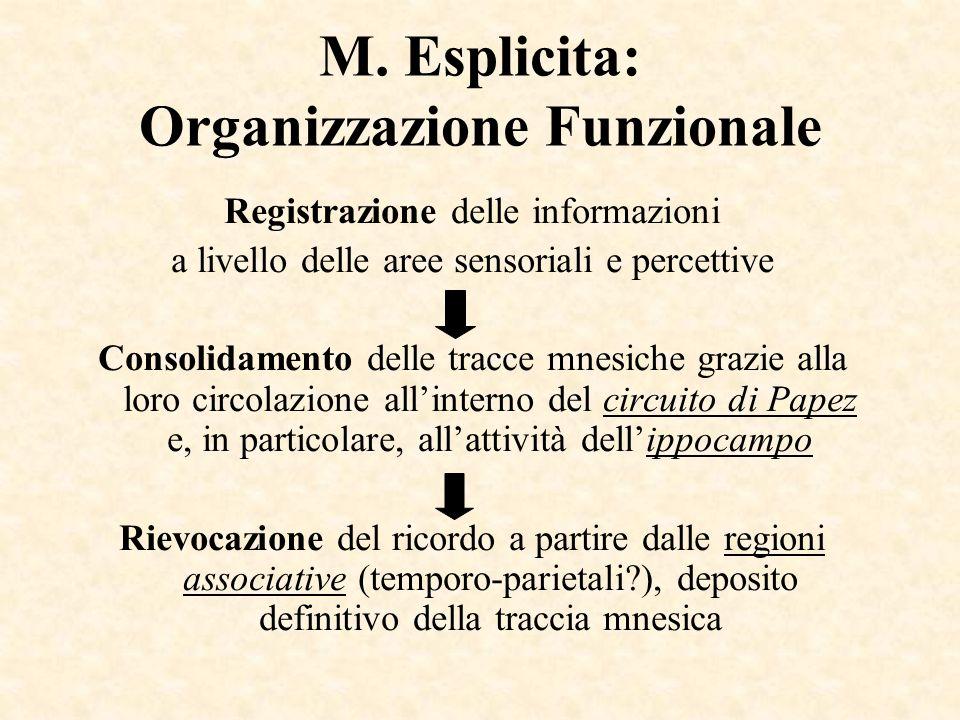 M. Esplicita: Organizzazione Funzionale