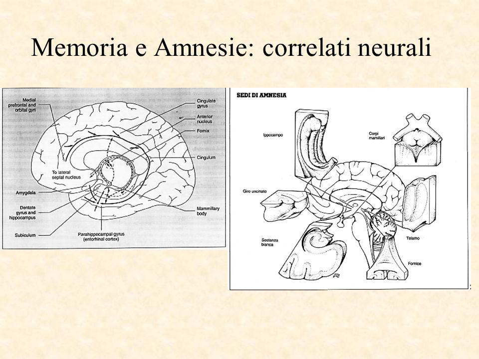 Memoria e Amnesie: correlati neurali
