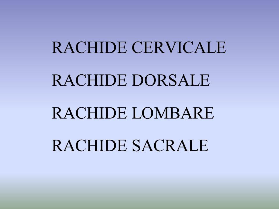 RACHIDE CERVICALE RACHIDE DORSALE RACHIDE LOMBARE RACHIDE SACRALE