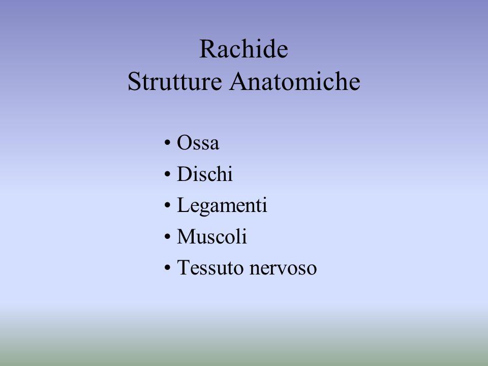 Rachide Strutture Anatomiche