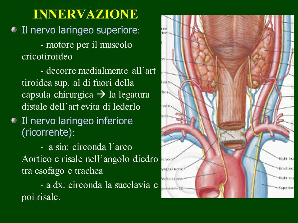 INNERVAZIONE Il nervo laringeo superiore: