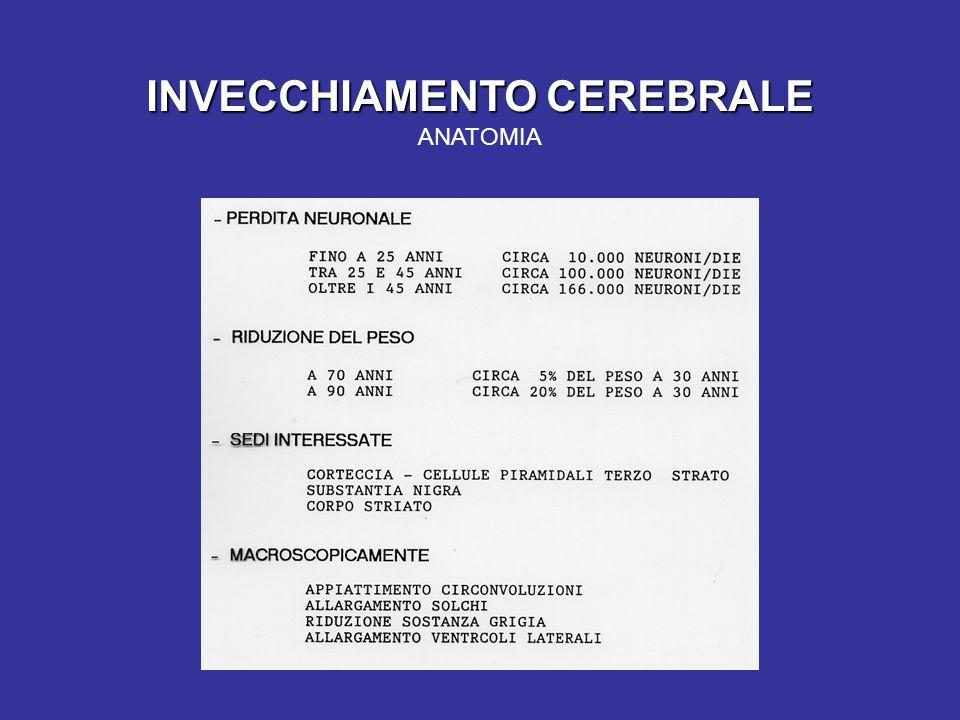 INVECCHIAMENTO CEREBRALE ANATOMIA