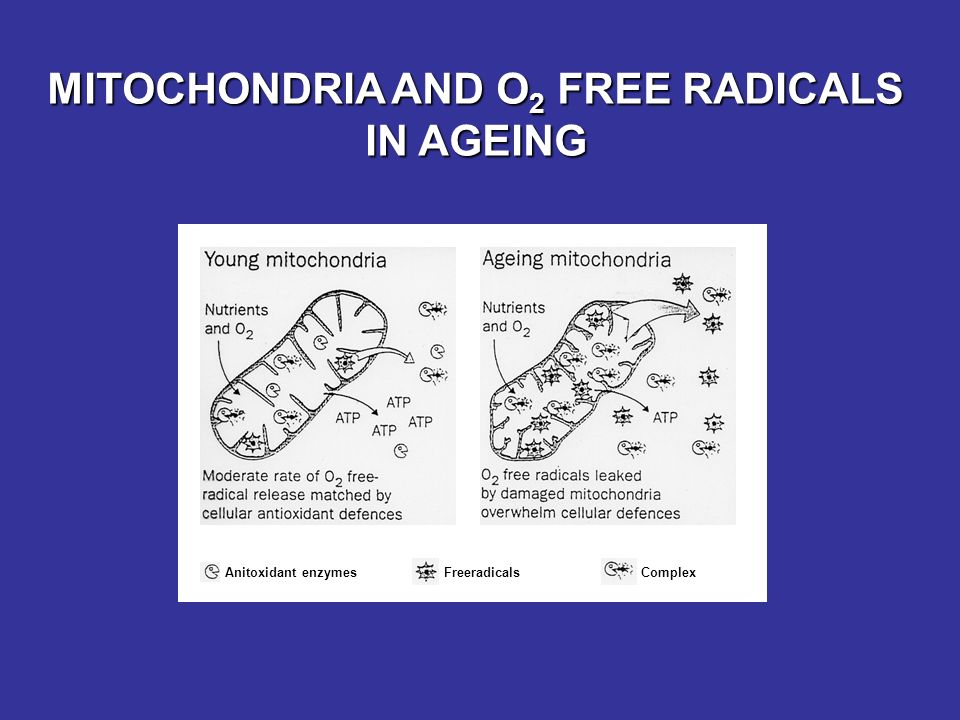 MITOCHONDRIA AND O2 FREE RADICALS IN AGEING