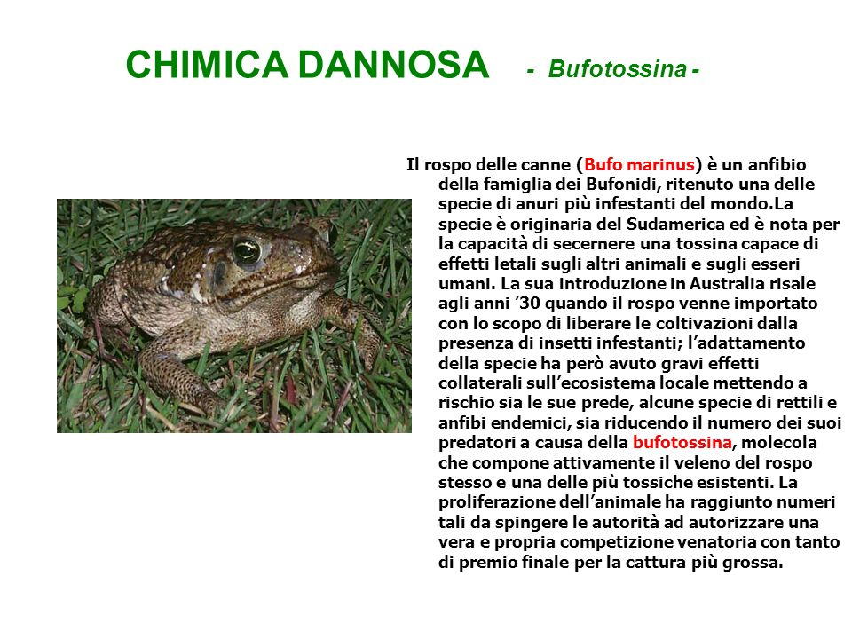 CHIMICA DANNOSA - Bufotossina -