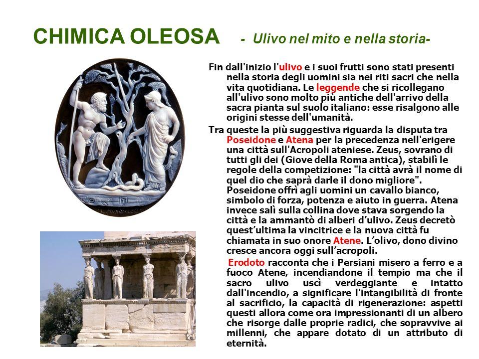 CHIMICA OLEOSA - Ulivo nel mito e nella storia-