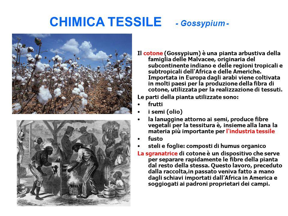 CHIMICA TESSILE - Gossypium -