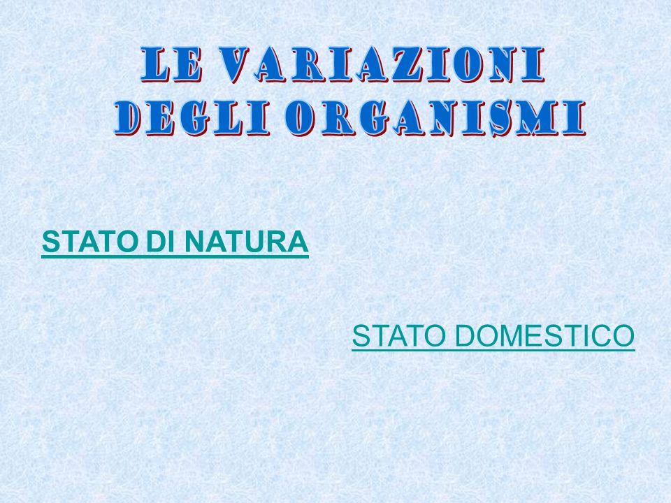 LE VARIAZIONI DEGLI ORGANISMI STATO DI NATURA STATO DOMESTICO